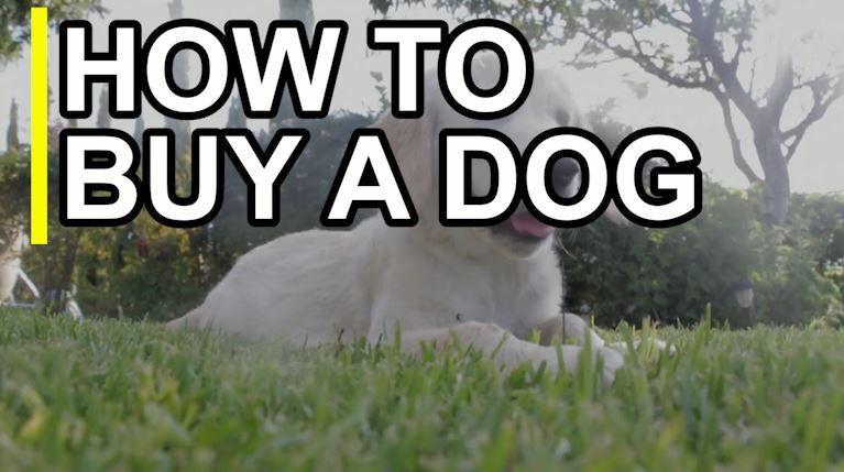 Vendeur de chiens interdit d'élever des chiots  – Médaille pour collier