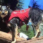 6 meilleures gilets de sauvetage pour chiens (pour tous les types de chiens)  – Médaille chien gravée
