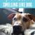 Comment empêcher votre maison de sentir comme un chien  – Médaille personnalisée pour chiens