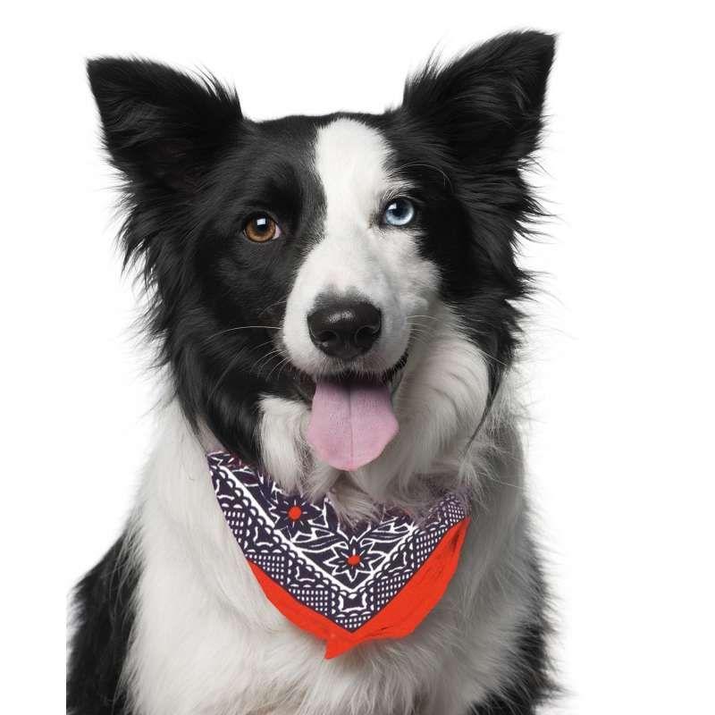 Médaille pour chien collier chien bandana