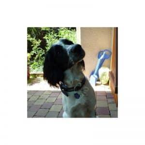 Médaille pour chien medaille pour chien en forme de patte