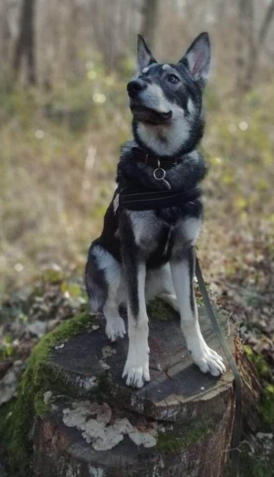 collier lune chien truffaut