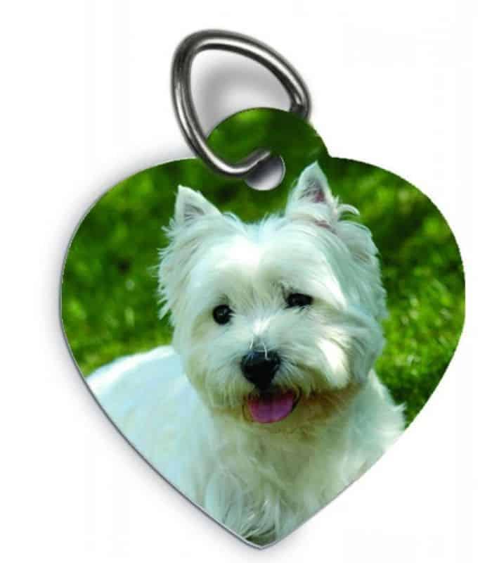 Médaille chien collier chien diamant