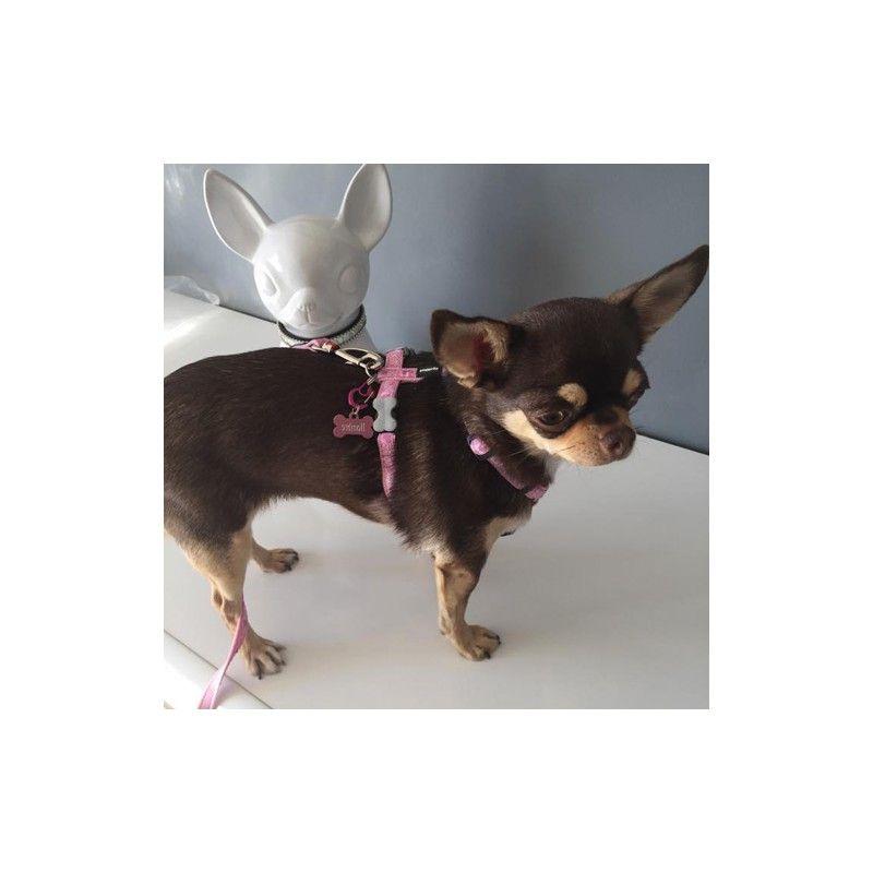 Médaille pour chien harnais chiot chihuahua