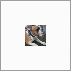 Médaille pour chien collier gravé