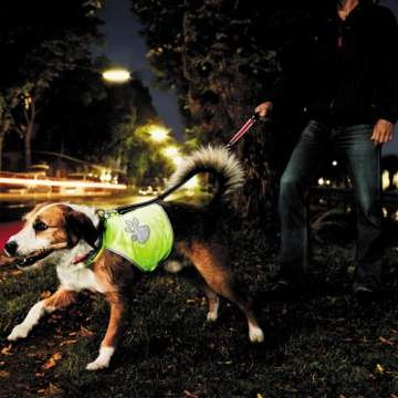 collier lune chien maxi zoo