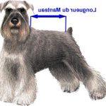 Médaille pour chien chiot petite taille