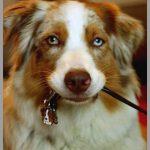 Médaille chien site pour chat