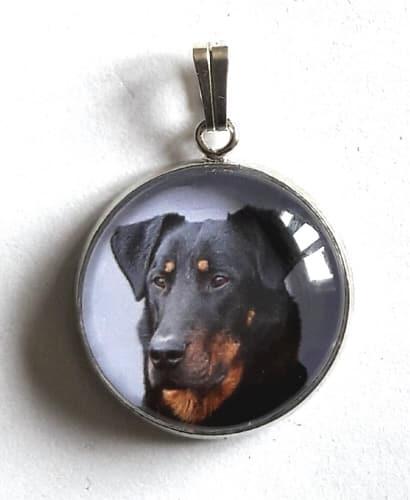 Médaille chien medaille chien cuivre