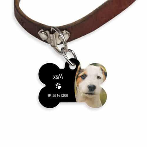 Médaille chien collier chien cuir