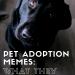 Quels mèmes d'adoption d'animaux se trompent  - Médaillon pour chien