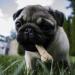 Tendances à venir pour la santé de votre chiot en 2019  - Médaille personnalisée pour chiens